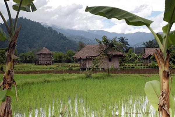תמונת נוף חקלאי ירוק בצפון תאילנד