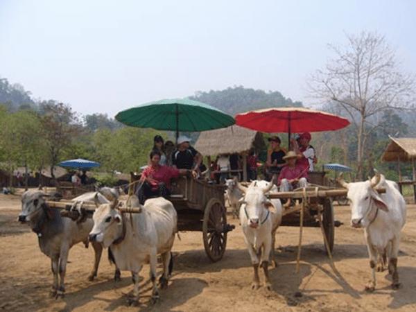 תמונה של רכיבה על עגלת שוורים בטיול טאנה תאילנד – ספארי ג׳יפים