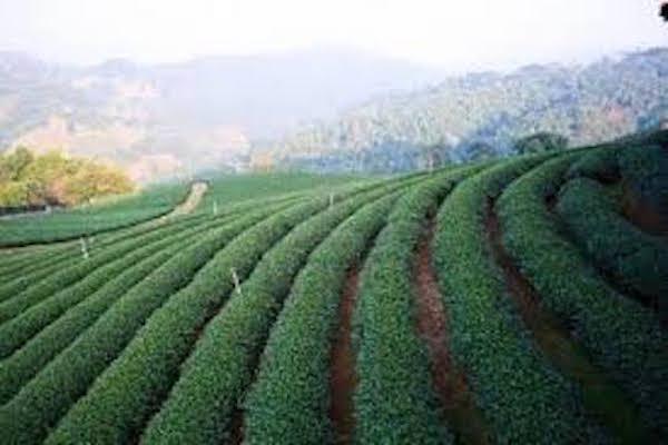 תמונת שדות חקלאיים בצ׳אנג ראי מתוך אתר סגול - טיול לתאילנד