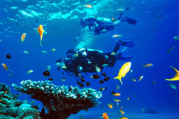 תמונה של נוף תת מימי בקו טאו מומלץ מאוד לצלילות בתאילנד. מתוך אתר טיול לתאילנד של סגול - סוכנות נסיעות בתאילנד