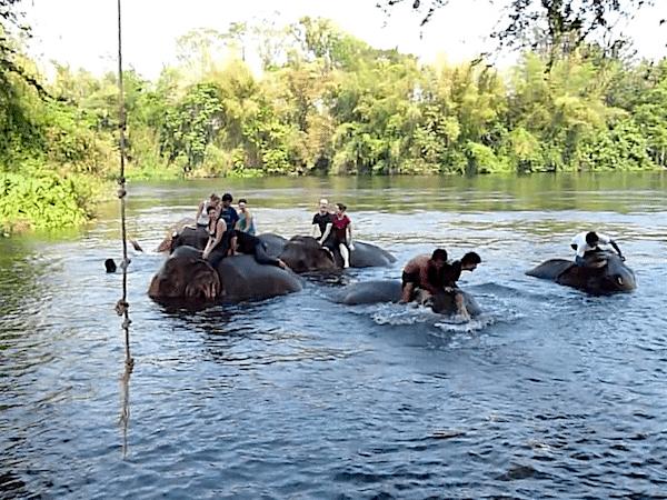 תמונה של רחיצת פילים - אטרקציה חביבה בקנצ'נבורי